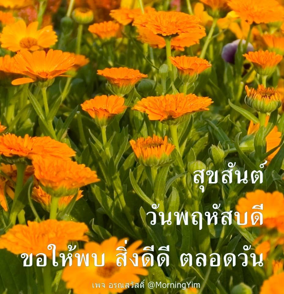 อรุณสวัสดิ์วันพฤหัสบดีสีส้ม
