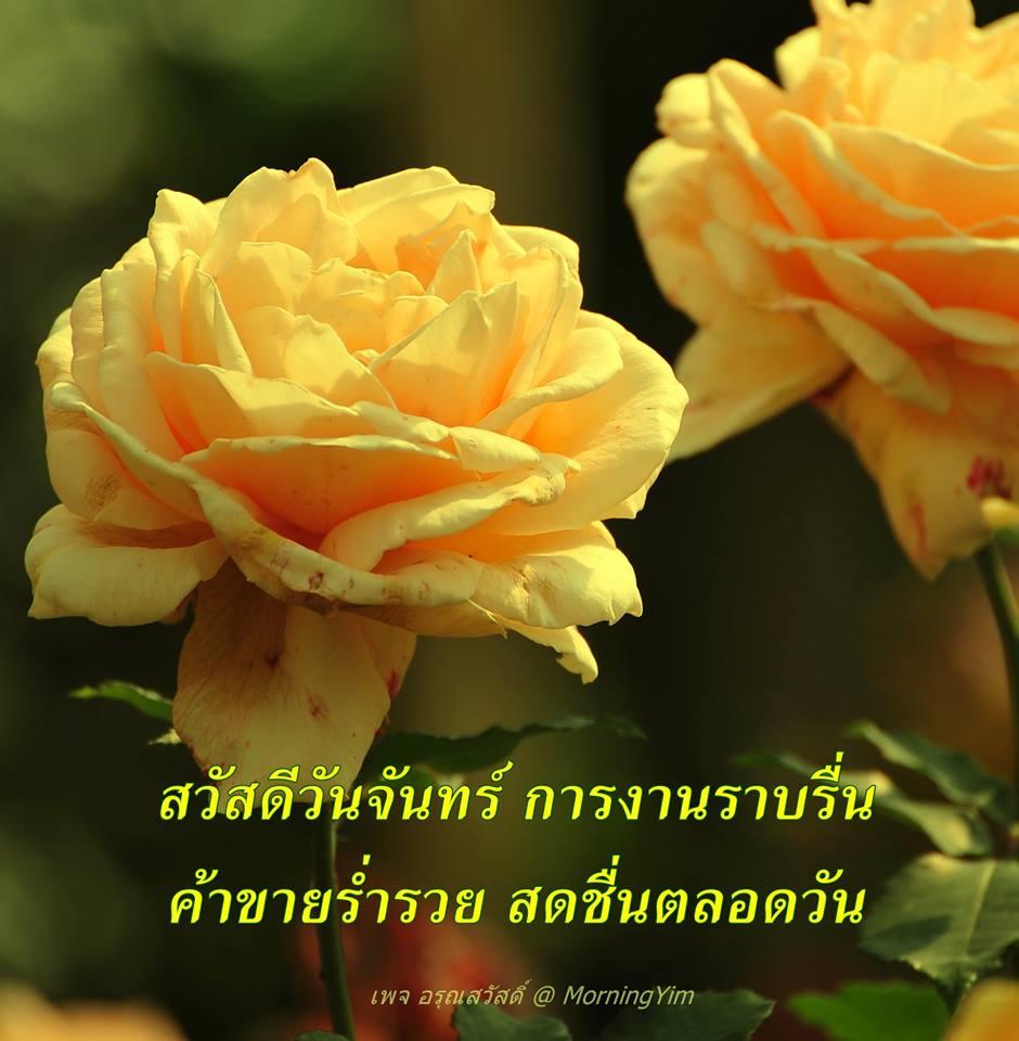 สวัสดีวันจันทร์ ด้วยดอกกุหลาบสีเหลือง