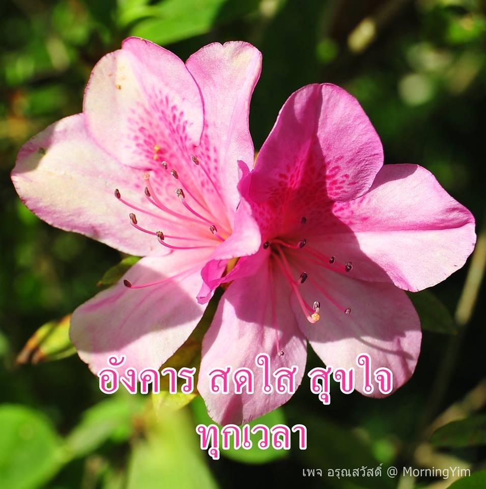 อรุณสวัสดิ์วันอังคารด้วยดอกไม้สีชมพู