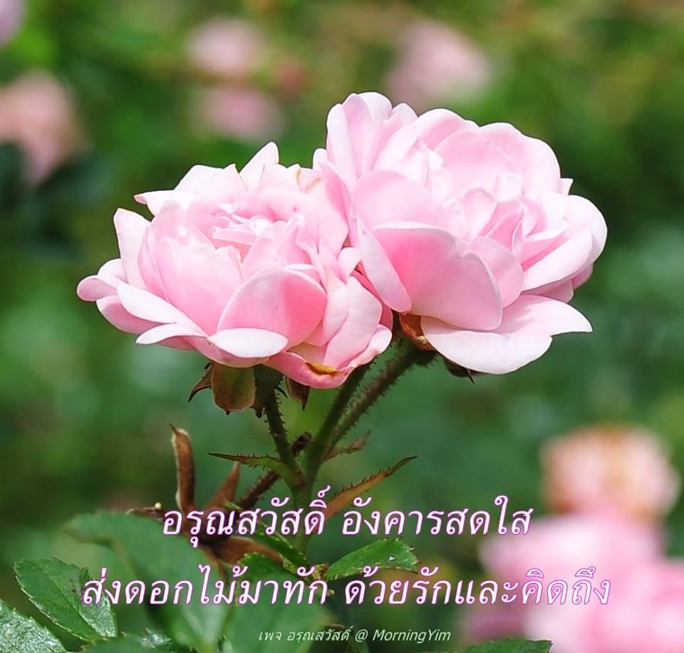 อรุณสวัสดิ์วันอังคารสีชมพู