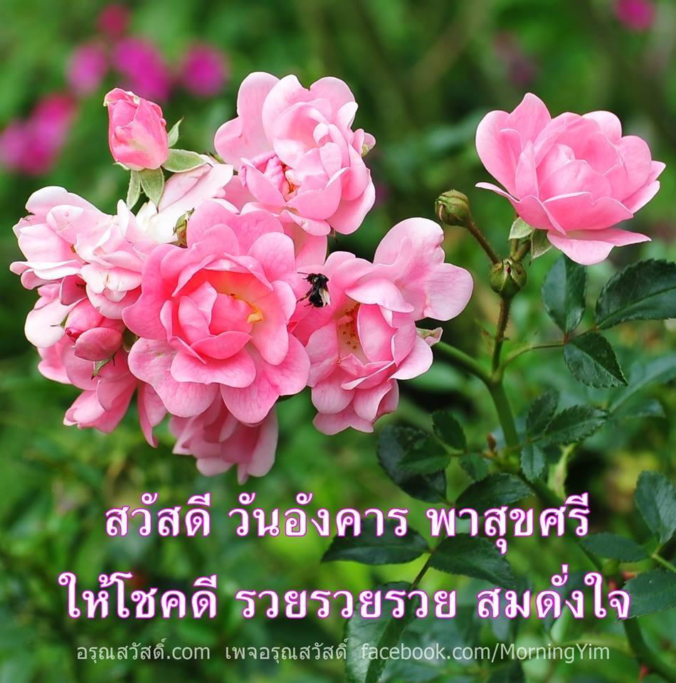 สวัสดีวันอังคารด้วยดอกกุหลาบสีชมพู