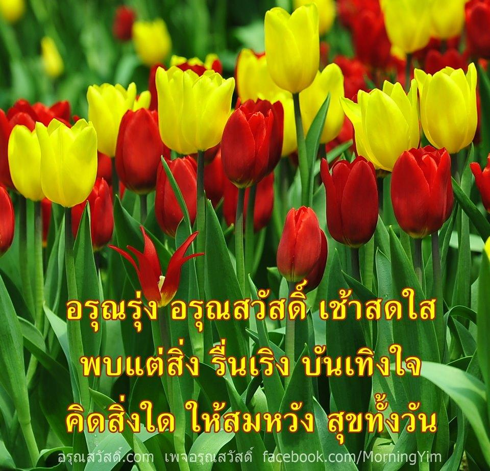 อรุณสวัสดิ์ยามเช้าด้วยดอกทิวลิป Tulipa