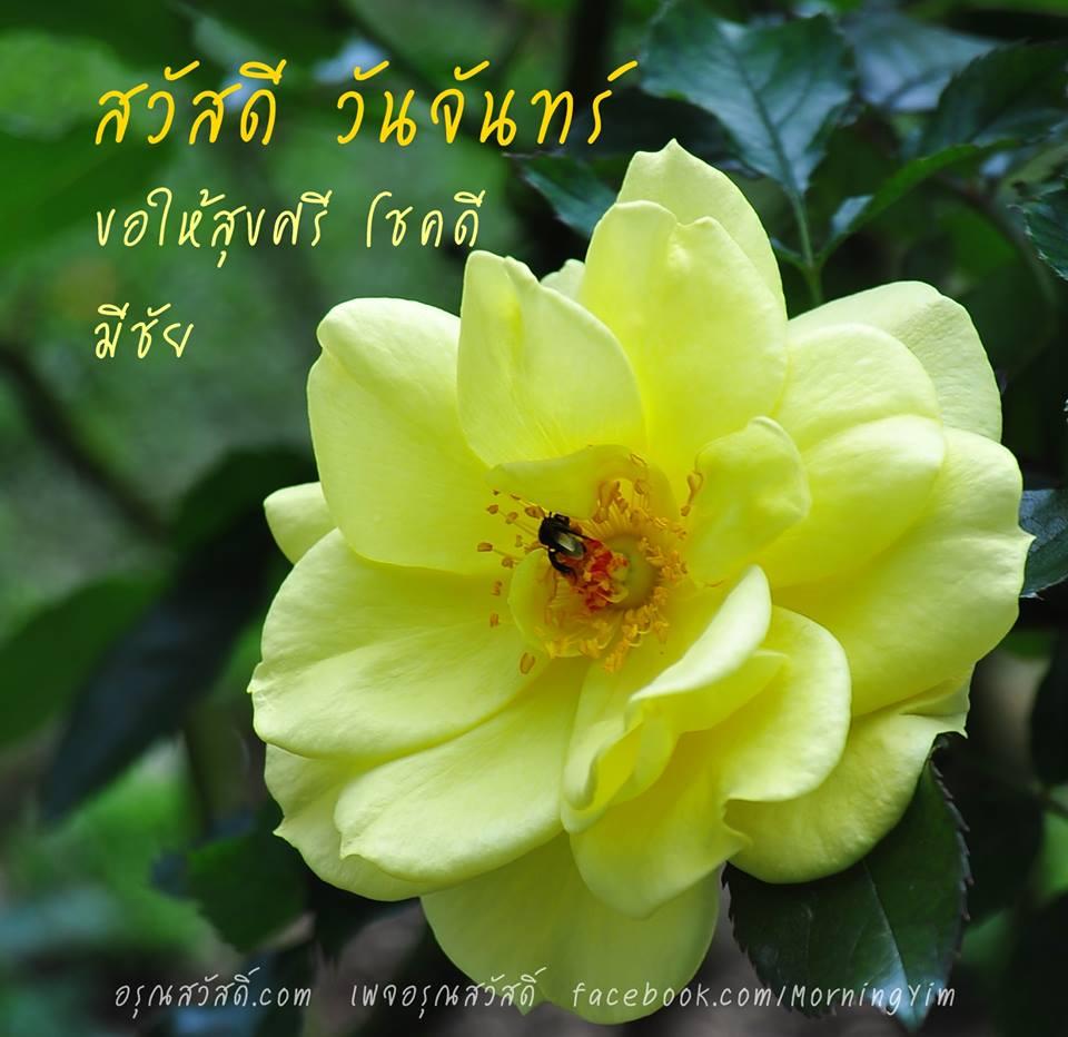 สวัสดีวันจันทร์ด้วยดอกกุหลาบสีเหลือง