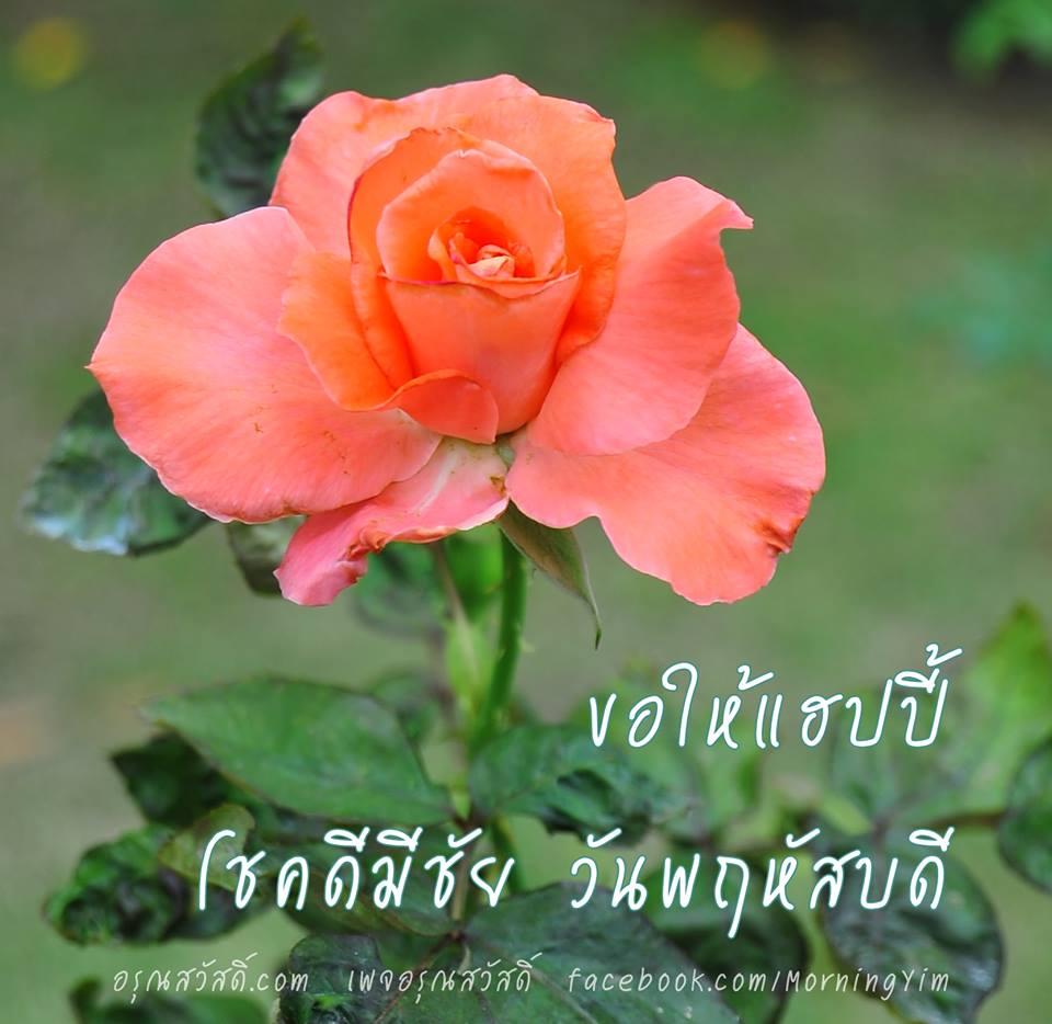 อรุณสวัสดิ์วันพฤหัสบดีด้วยดอกกุหลาบสีส้ม