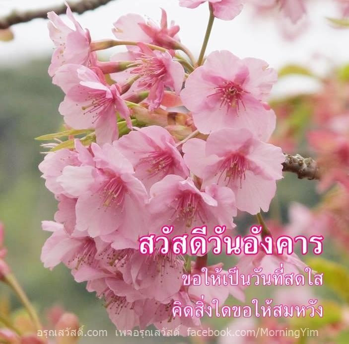 สวัสดีวันอังคารด้วยดอกซากูระ