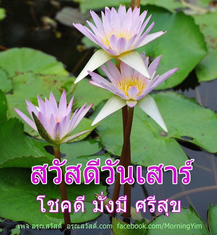 ดอกบัวสีม่วง