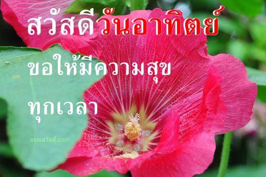 รูปภาพ อรุณสวัสดิ์ สวัสดี ดอกไม้สวยๆพร้อมกลอนอวยพรวันอาทิตย์ โหลดฟรี