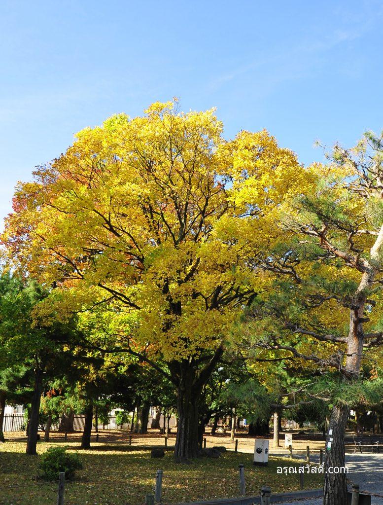 สวนต้นไม้ปราสาทมัตสึโมโตะ