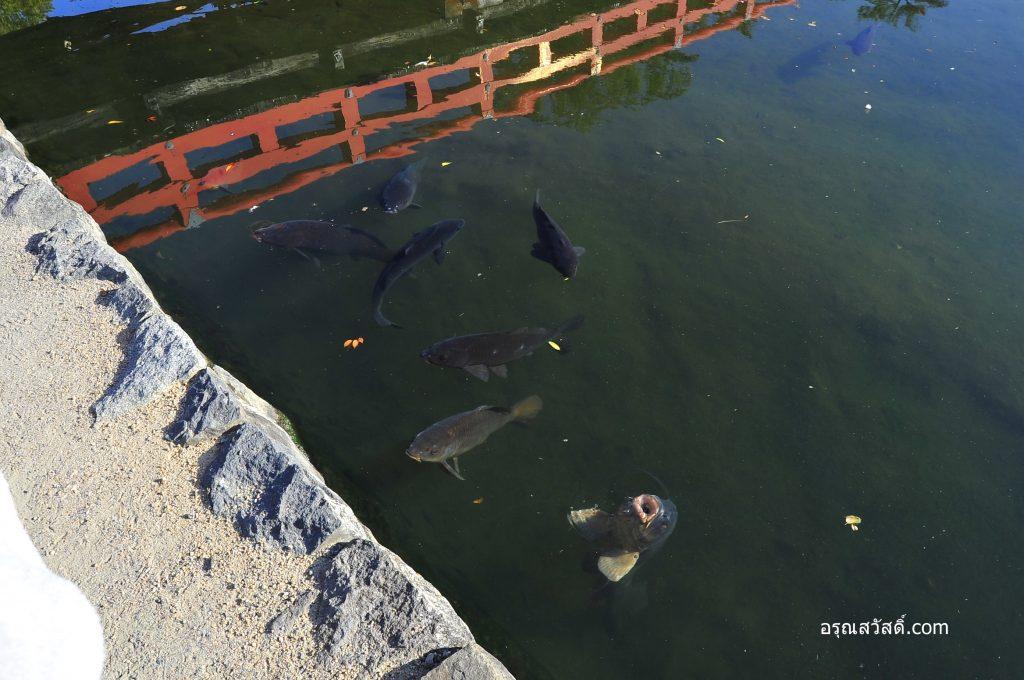 ปลาที่ปราสาทมัตสึโมโตะ