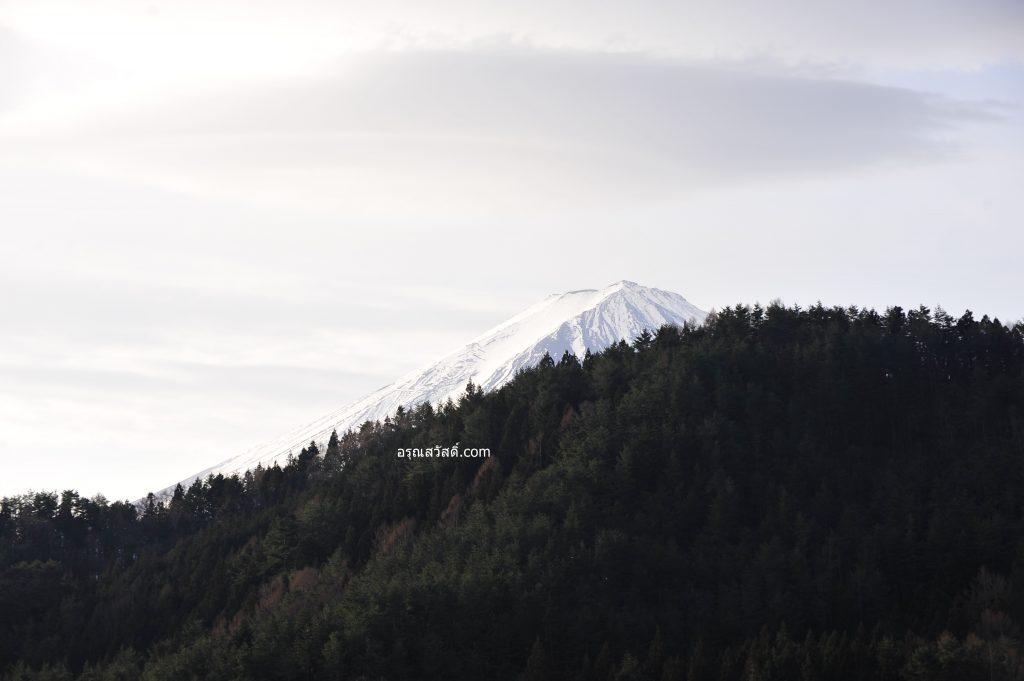 สวนโออิชิ ปาร์ค Oishi Parki ฤดูหนาว เดือนกุมภาพันธ์