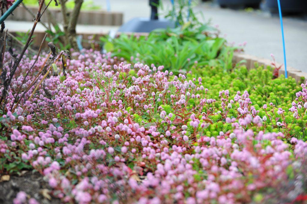 สวนโออิชิ ปาร์ค Oishi Parki เดือนพฤศจิกายน ฤดูใบไม้เปลี่ยนสี