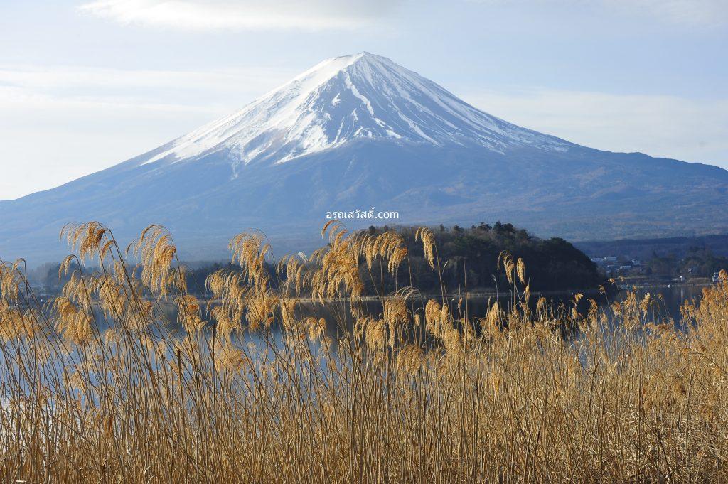 วิวภูเขาไฟฟูจิ สวนโออิชิ ปาร์ค Oishi Parki