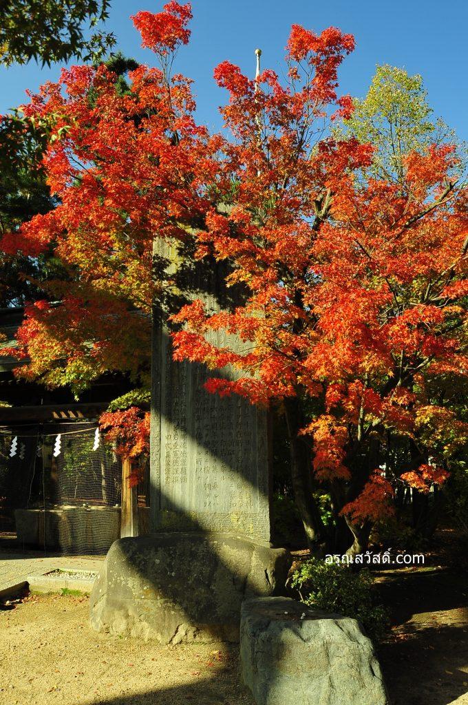 ต้นใบเมเปิ้ลศาลเจ้าโยฮะชิระ Yohashira Shrine