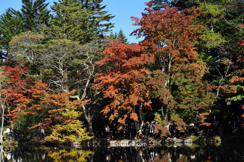 บึงใบไม้เปลี่ยนสีเมืองคารุอิซาว่า Karuizawa